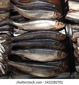 Macro Photo food salted herring fish. Texture background fish herring lies in rows. Image of seafood herring fish