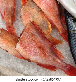 Macro photo food sea product fish red sea ​​bass. Background fish red sea ​​bass lies on the ice. Image of a fresh headless red sea ​​bass product lying in the ice