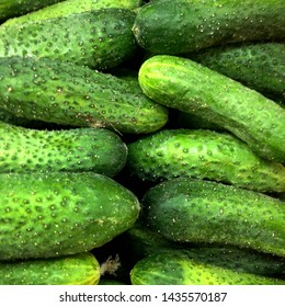 Macro Photo food vegetable cucumber. Texture background food vegetables ripe juicy cucumbers. Image food product vegetable green cucumber
