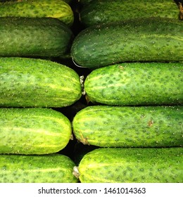 Macro photo food vegetable cucumber. A lot of juicy green cucumbers with pimples. Texture background Green organic cucumbers.