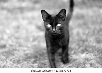 Macro photo of a funny black kitten looking at you in the park