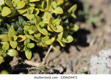 Macro photo of green desert vegetation.