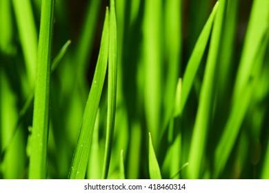 Macro photo of green grass