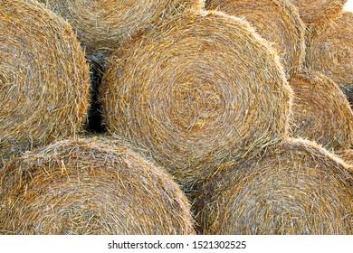 Macro photo haystack on the farm. Photo landscape haystack rolls in the field