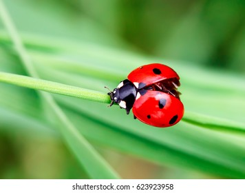ladybug images stock photos vectors shutterstock