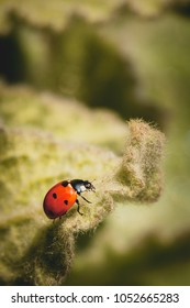 Macro photo of  ladybug in nature with green background.
