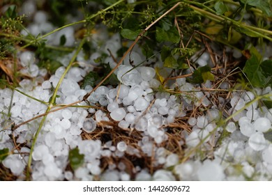 Macro photo of large hailstones in a meadow.