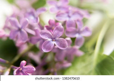 Macro photo of lilac floers. Tender spring flowers making a light mood.