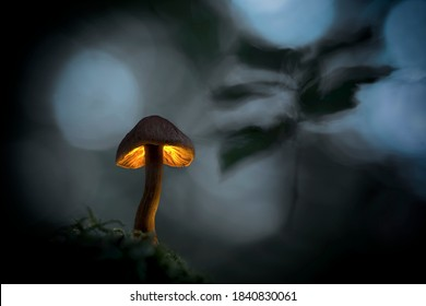 Macro photo of mushroom in the dark forest, moss in the foreground, fern leaves in the background
