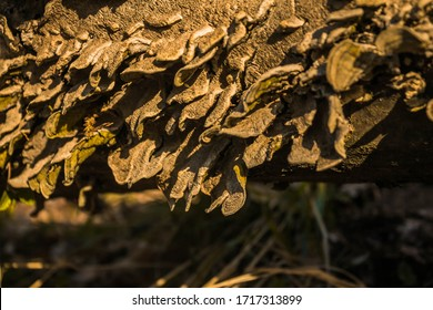 Macro photo of mushroom in the forest
