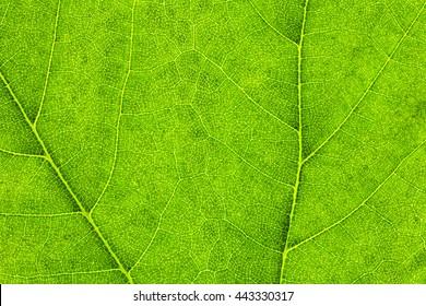 Macro Photo Of Natural Green Leaf Pattern
