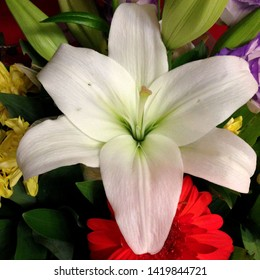 Macro photo nature blooming flower lilium. Background texture bouquet with blooming white flowers lilies. Image of a plant June blooming lily
