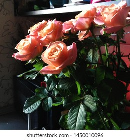 Macro photo nature blooming flower pink rose. Background plant rose with pink and open bud. Image plant blooming rose