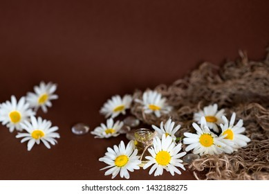 Macro photo of nature blooming mini daisy oxeye flower. Background of opened buds of wild daisy flower. Picture of oxeye daisy flowers field.