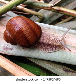 Macro photo nature mollusk snail Helix pomatia. Snail on the background of moss. Snail in shell