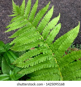 Macro photo of nature plant fern. Texture background of green leaves of fern with raindrops. An image of a plant fern.