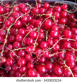 Macro photo of the nature of red currant berries. Texture background of red currant berries. Image product red currants on a branch