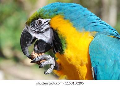 macro photo parrot