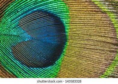 Macro photo of peacock feather.