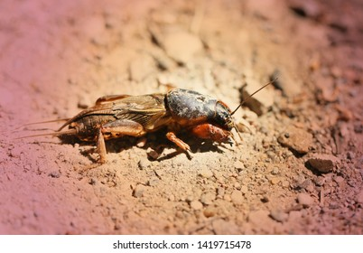 Macro photo of a pest of a vegetable garden pest on sunlit ground
