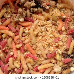 Macro photo pink red white maggots. Image background fishing bait pink worms fruit fly maggots.