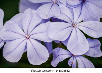 macro photo of a purple floers