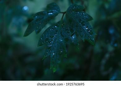 macro photo tropics after  rain