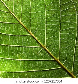 Macro photo of veined green leaf pattern. Natural beautiful background for layout. Top view