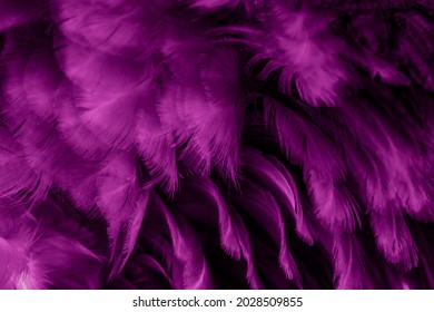 macro photo of violet hen feathers. background or textura - Shutterstock ID 2028509855
