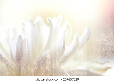 a macro photo of white flower,grunge texture