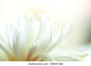a macro photo of white flower,multicolor