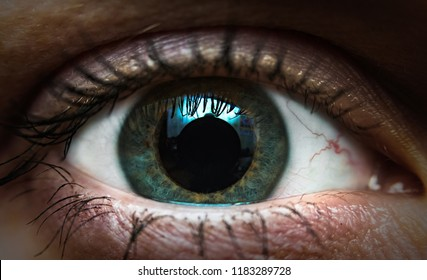 macro photo of a wide-open one human eye, eyeball with dilated pupil and reflection on its surface, gray eye color, painted and mascara eyeliner, fluffy eyelashes, women's cosmetics, self-care