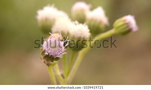 macro photo of wild flower in the meadow