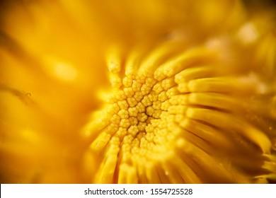 Macro photo of yellow flower - Shutterstock ID 1554725528