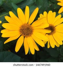 Macro photo Yellow summer flowers. Image blooming sunflower daisy flowers