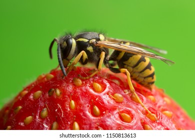 Macro photo of a yellowjacket on strawberry, coyspace in the photo