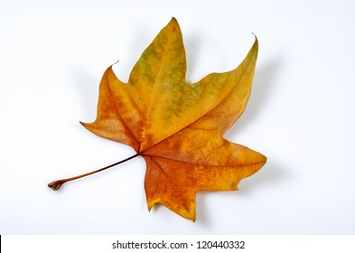 macro photograph of a fallen leaf in autumn