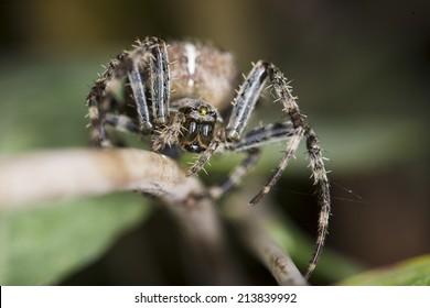 Macro photograph of a garden spider