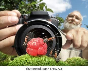macro photographer managing ants, focused on ants