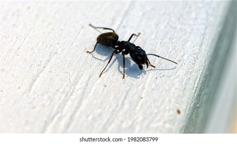 Macro Photography Ant Insect Bug