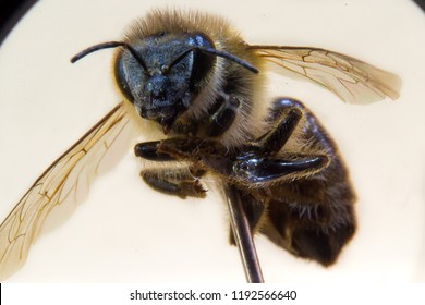 macro photography of a Bee trapped in a metal rod with the white background