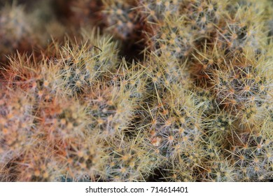 Macro photography of a cactus