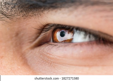 macro photography, close up photo,  of a brown colored eye  and eye lashes and eyebrown with shallow depth of field which means that only small portion of the image is in focus