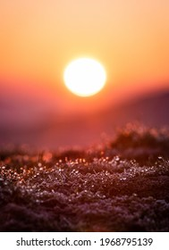 Macro Photography of Dew droplets at Sunrise