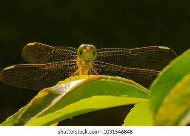 Macro photography of a dragonfly.