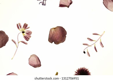 macro photography of flowers. stamen and petals. botanika - Shutterstock ID 1312706951