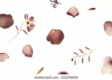 macro photography of flowers. stamen and petals. botanika - Shutterstock ID 1312706954