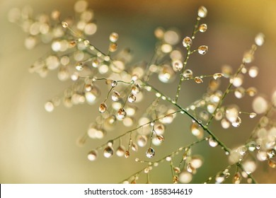 Macro photography of green grass with dew drops in the sunshine. Fresh morning dew on spring grass, abstract nature background.