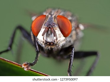 Macro Photography of Head of Housefly on Green Leaf
