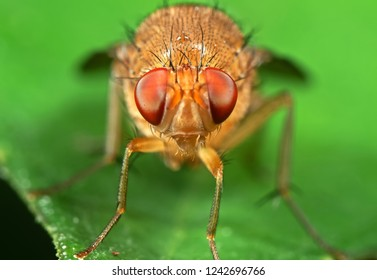 Macro Photography of Head of Little Orange fly on Green Leaf